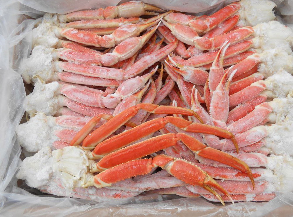 Canadian Snow Crab | Wild Oceans
